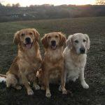 Hunde im Spessart