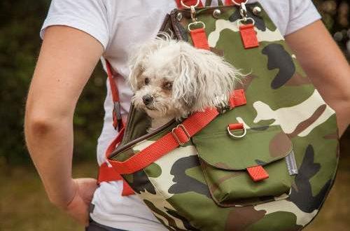Hundetrage, Hundetragetasche