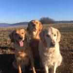 Urlaub mit Hund im Spessart