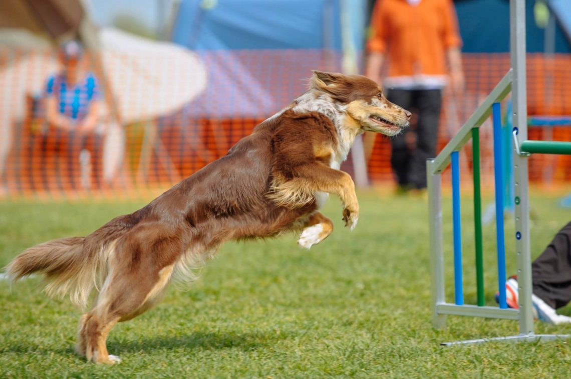 DOG Solution Agility