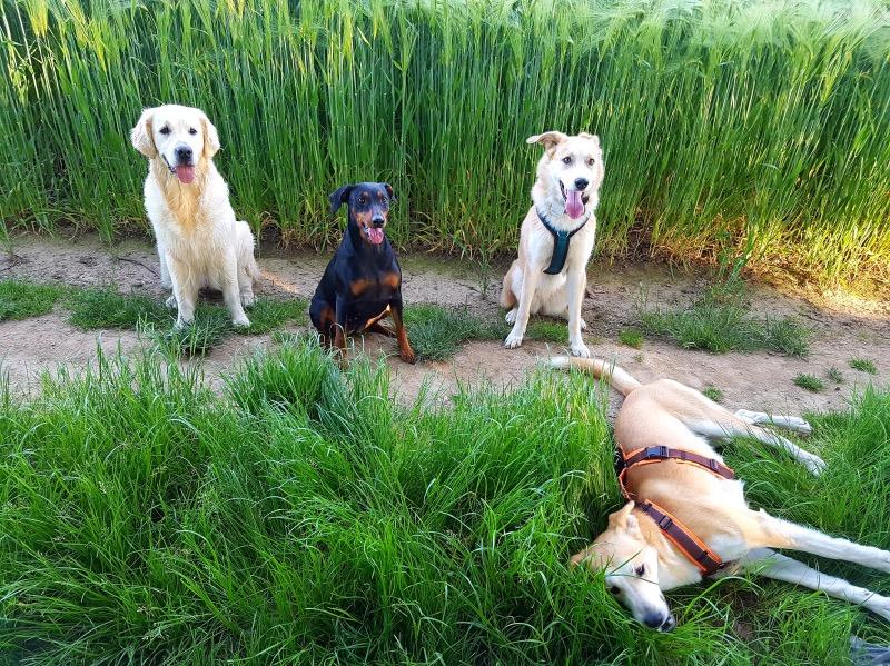 Erlebnisspaziergang Hundeschule Wuppertal