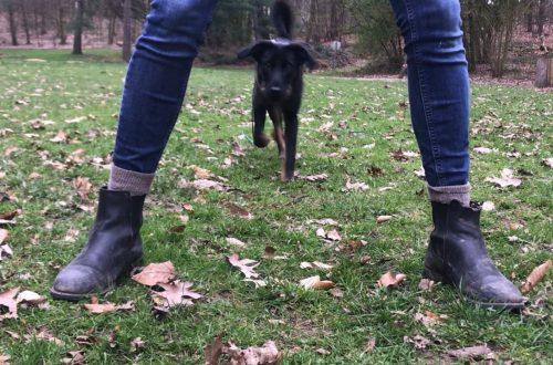 Das Hundetraining für zu Hause.