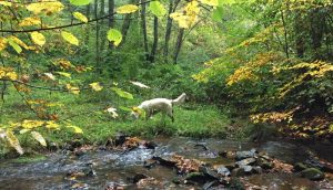 Apportieren im Wald